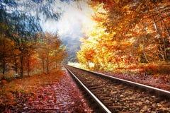 铁路在秋天森林里 免版税库存图片