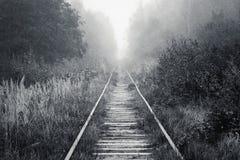 铁路审阅有雾的森林在早晨 免版税库存照片