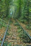 铁路导致绿色灌木隧道  免版税库存图片