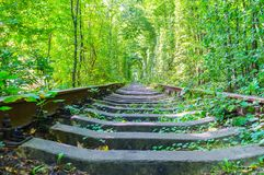 铁路路在森林里 图库摄影