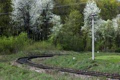 铁路路,户外 开花的结构树 图库摄影