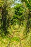 铁路通过森林 免版税库存照片