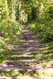 铁路隧道在森林里 免版税图库摄影
