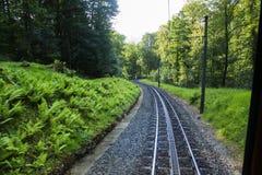 铁路绿色树和灌木 免版税库存照片
