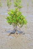 铁铊矿海滨广场结构树 免版税库存照片