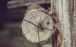 铁锈在木的金属钉子 免版税库存图片