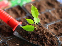 铁锹土壤 免版税库存照片