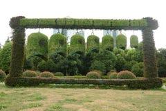铁琴塑造的植被 免版税图库摄影