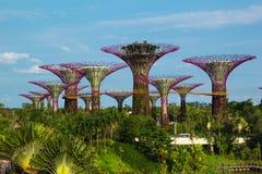 铁Supertrees在滨海湾公园在新加坡 免版税库存图片