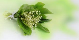 铃兰花束与下落的在软的绿色背景 免版税库存照片