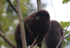 铜制的伶猴 图库摄影