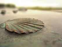 铜制的贝壳 免版税图库摄影