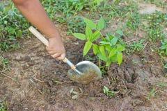 铲起结构树。 库存图片