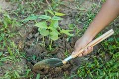 铲起结构树。 免版税库存图片