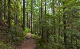 银在Mt更加多雨的NP的秋天足迹 免版税库存照片