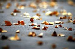 银杏叶子 免版税库存照片