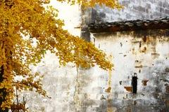 银杏树叶子在村庄,中国 免版税图库摄影