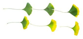 银杏树叶子cdr做房屋设计图图片