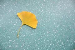 银杏树叶子 免版税库存照片
