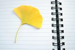 银杏树叶子 免版税图库摄影