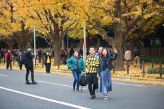 银杏树大道,东京 库存图片