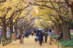 银杏树大道,东京 免版税库存图片