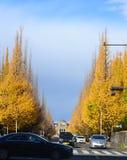 银杏树大道, Icho Namiki在东京 免版税库存照片