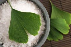 银杏树biloba叶子和腌制槽用食盐 免版税库存照片