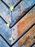 银杏树biloba叶子和长凳 库存照片