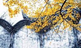 银杏树biloba叶子在无锡停放 免版税库存照片