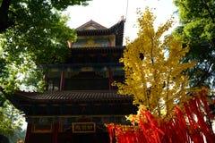 银杏树biloba和寺庙 免版税库存图片
