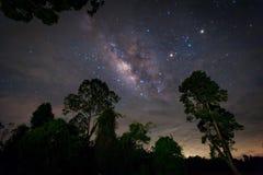 银河星系,与树的惊人的星的夜空 免版税库存图片