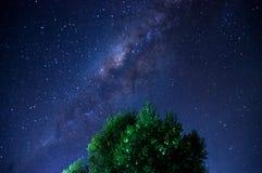 银河蓝星天空树叶子 免版税库存照片