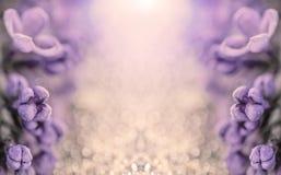 银色发光的背景的宏观照片与紫色紫罗兰色花的与拷贝空间 库存图片