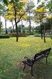 银色喇叭树 免版税图库摄影
