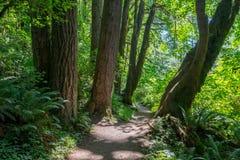 银色小河峡谷外缘的绿色森林  免版税库存照片