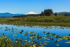 银色湖和Mt.St.Helens在天际 图库摄影