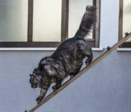 银色猫出去 免版税库存照片