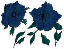 银莲花属传染媒介花艺术品 向量例证