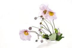 银莲花属开花木头 库存图片