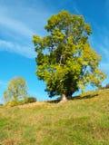银行结构树 库存图片