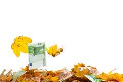 银行落的叶子附注 免版税库存照片