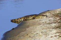 银行鳄鱼湖一点 免版税库存照片