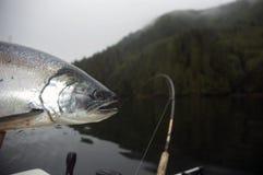 银鲑鱼 免版税库存图片