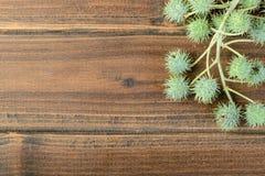 铸工植物果子  库存图片