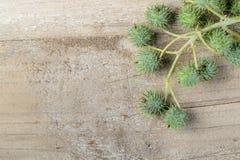 铸工植物果子  免版税图库摄影