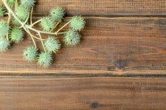 铸工植物果子  免版税库存图片