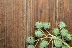 铸工植物果子  免版税库存照片