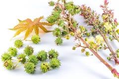 铸工植物部分 免版税图库摄影