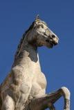 铸工雕象有一匹马的在Capitoline小山在罗马 免版税库存照片